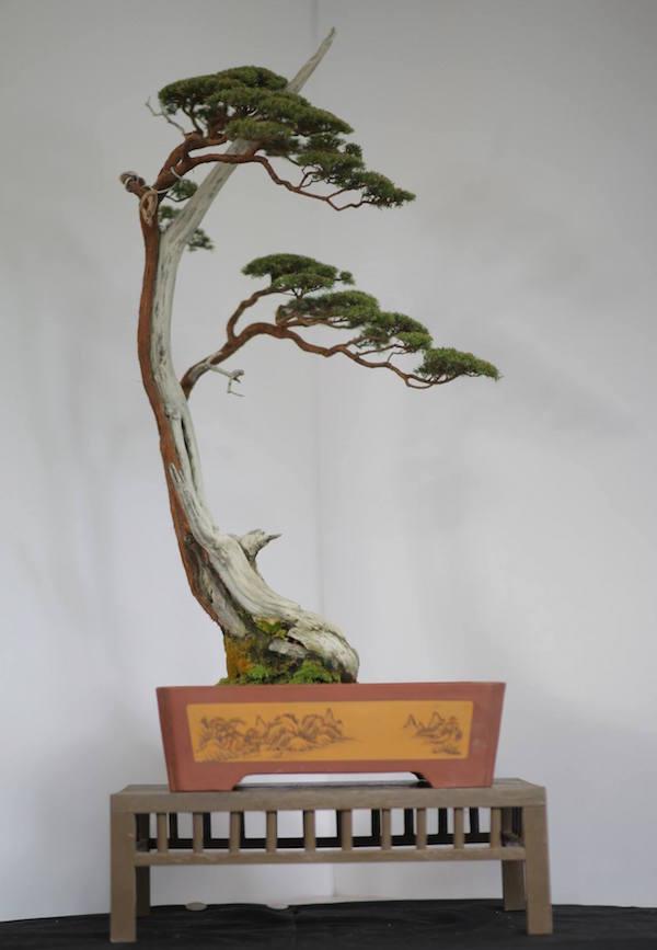vorher und nachherfotos bonsai empire. Black Bedroom Furniture Sets. Home Design Ideas