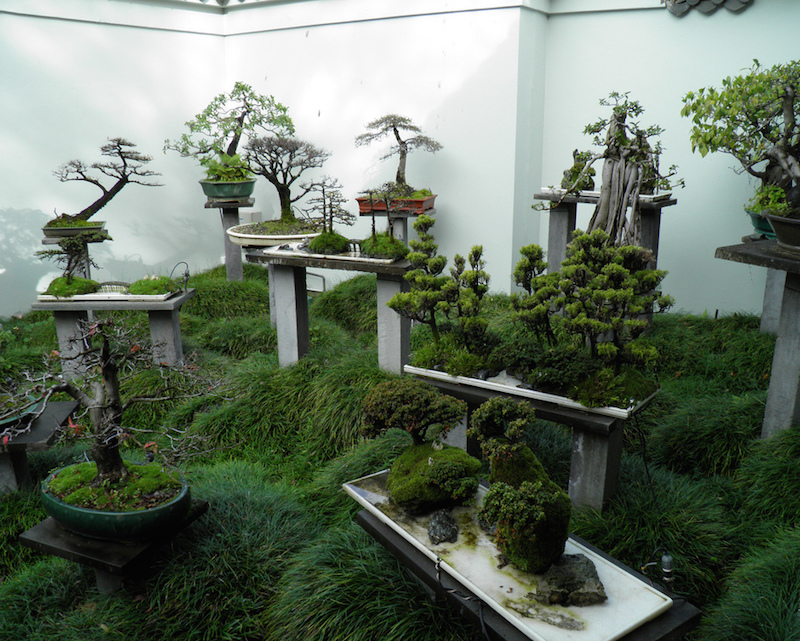 Bonsai Garden in china by Paul Thompson