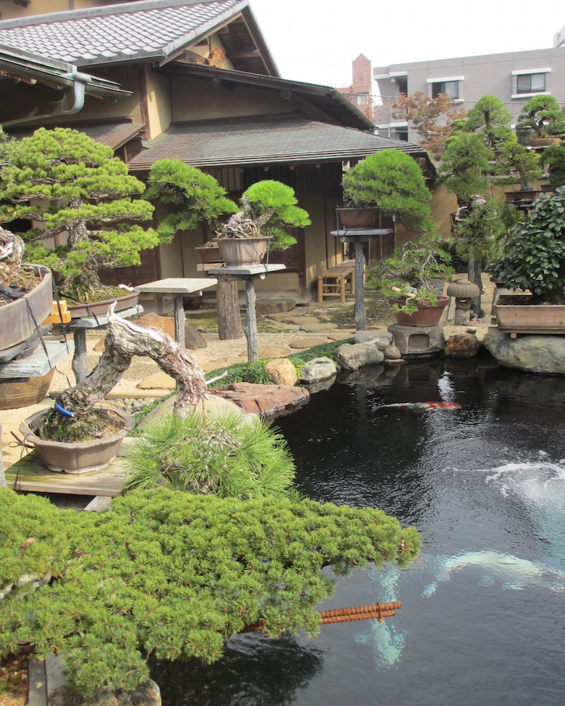Bonsai garden with Koi pond
