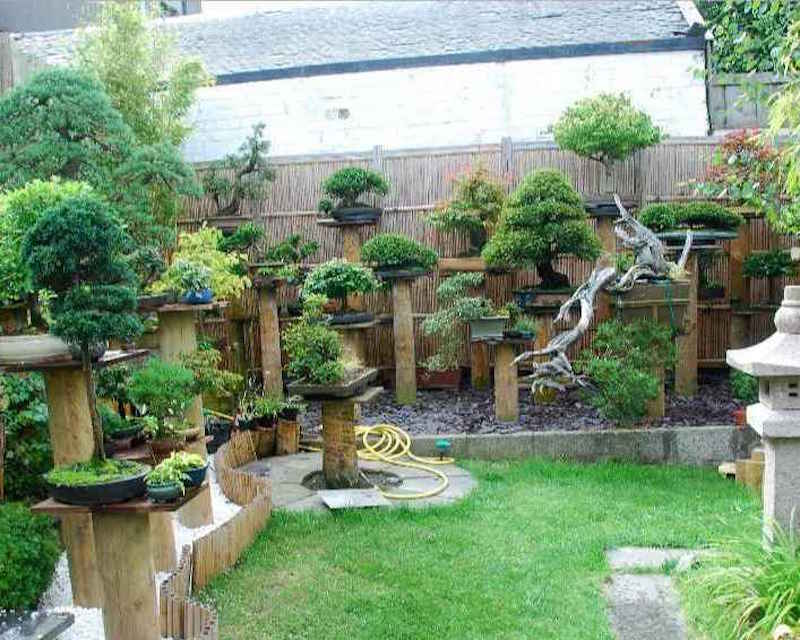 StreamLinkcom Bonsai Garden