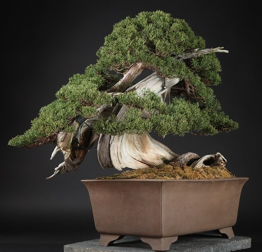 Die Teuersten Bonsai Bonsai Empire