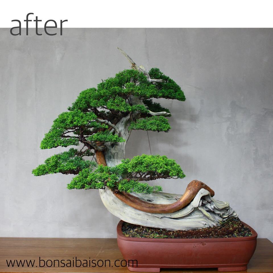 die gro e welle vor kanagawa bonsai empire. Black Bedroom Furniture Sets. Home Design Ideas