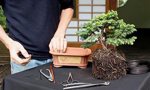 Wie man einen Bonsai gestaltet