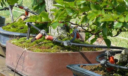 Automatische Bonsai-Bewässerung