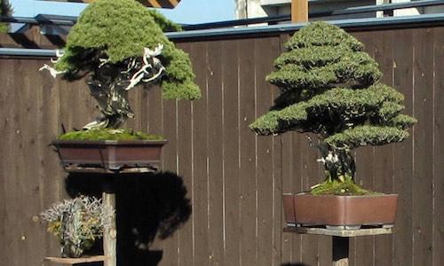 Bonsai-Gartengestaltung