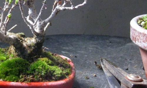 Pflege und Haltung von Bonsai-Bäumen - Bonsai Empire