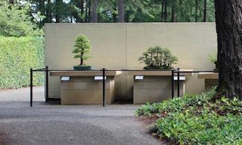 Pflege Und Haltung Von Bonsai-bäumen - Bonsai Empire Basiswissen Bonsai Baum Arten Pflege