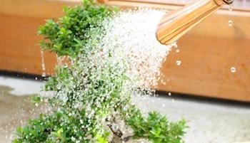 Pflege Und Haltung Von Bonsai Baumen Bonsai Empire