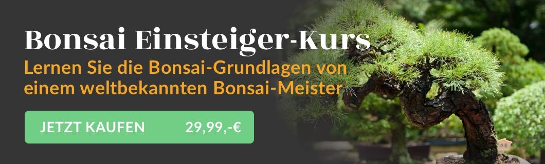 Bonsai Einsteiger -Kurs