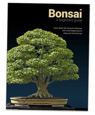 bonsai ein leitfaden f r anf nger ebook bonsai empire. Black Bedroom Furniture Sets. Home Design Ideas