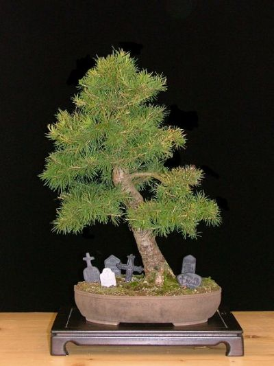 Halloween design bonsai
