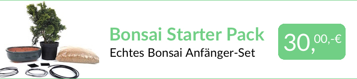 Bonsai Starter Pack