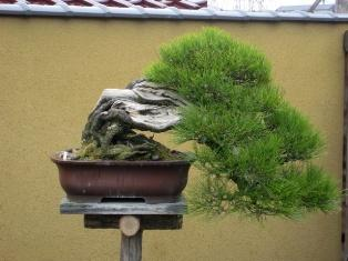 Kinashi Bonsai village