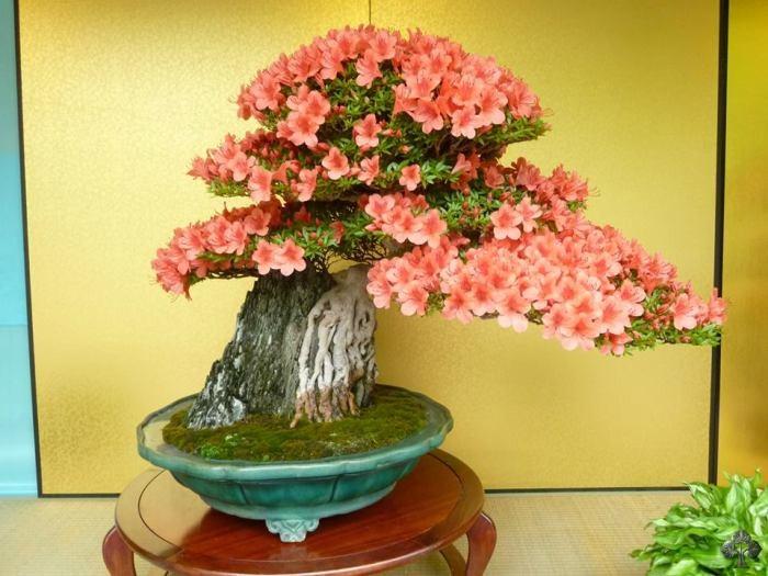 Top 10: Blühende Bonsai - Bonsai Empire