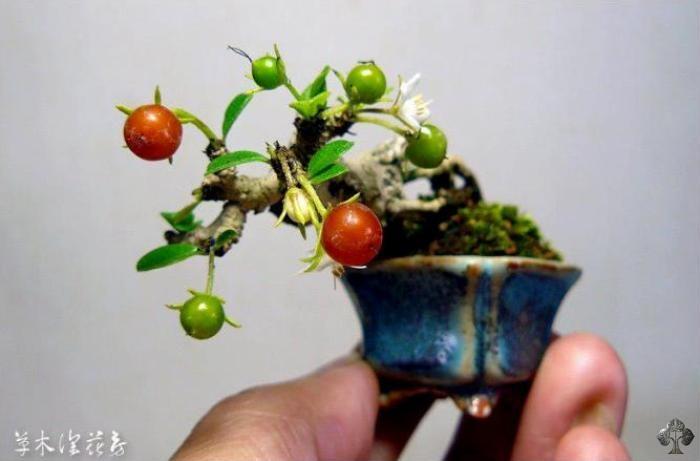 Top 10 Die Kleinsten Bonsai Bonsai Empire