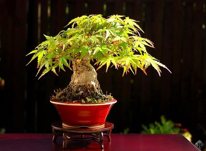 top  die kleinsten bonsai bonsai empire